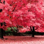 Η αρχή του φθινοπώρου